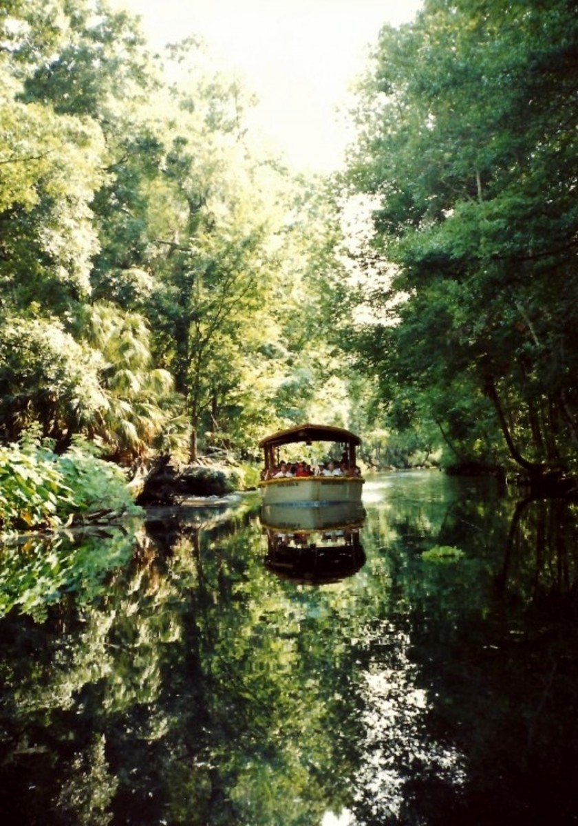 Jungle Cruise in Glass Bottomed Boat Ride at Silver Springs, Florida