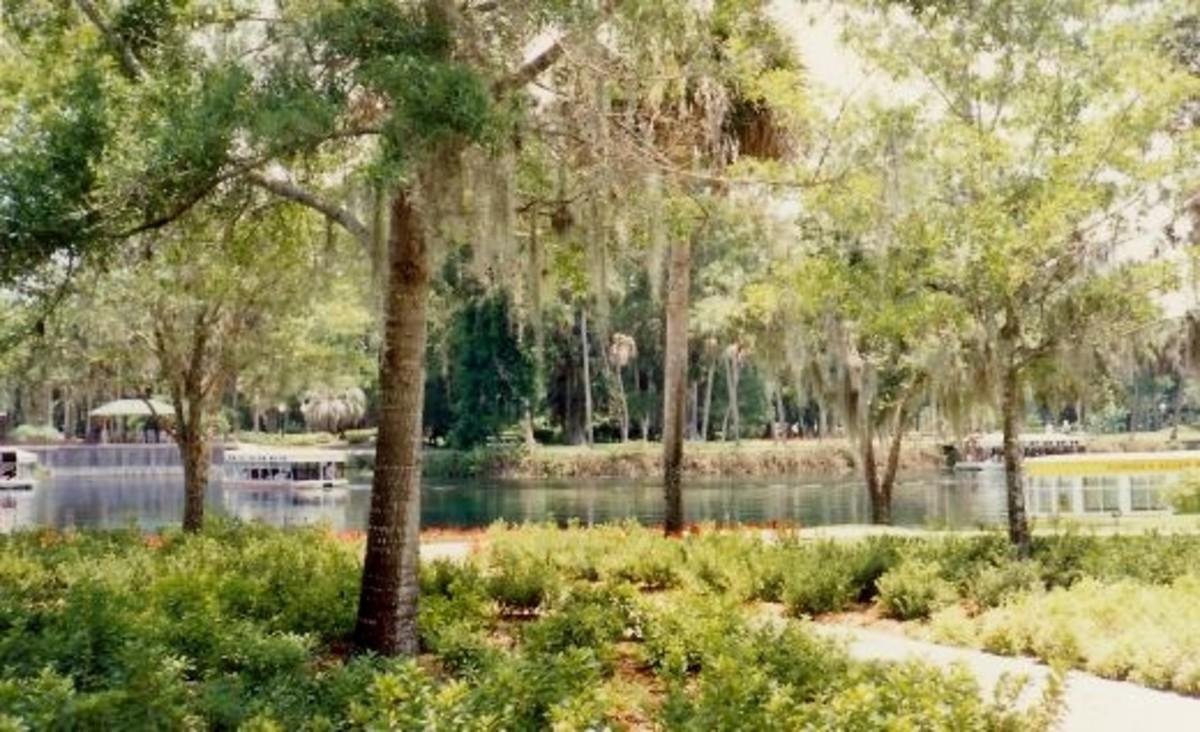 Glass bottomed boats at Silver Springs, Florida