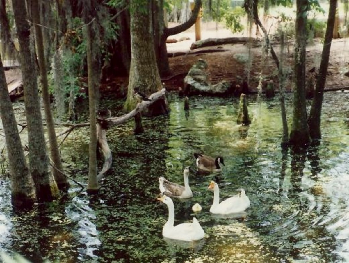 Silver Springs in Florida