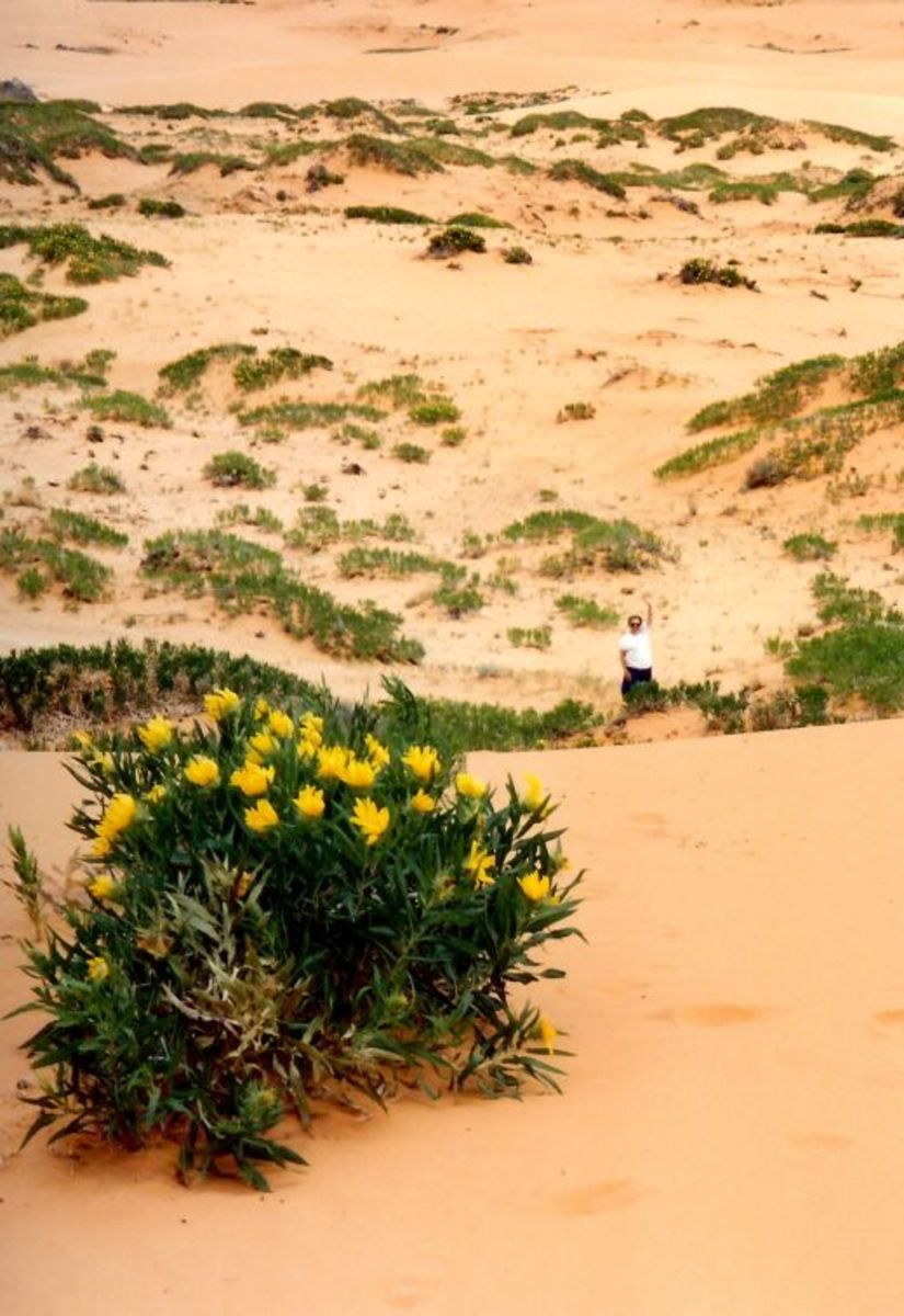That is my mother down there at the bottom of the sand dune waving at me.