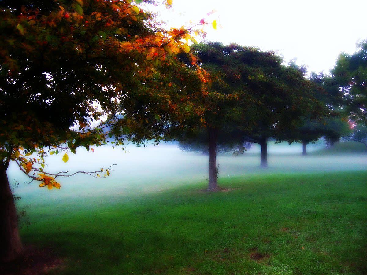 Mitchell Park Fog