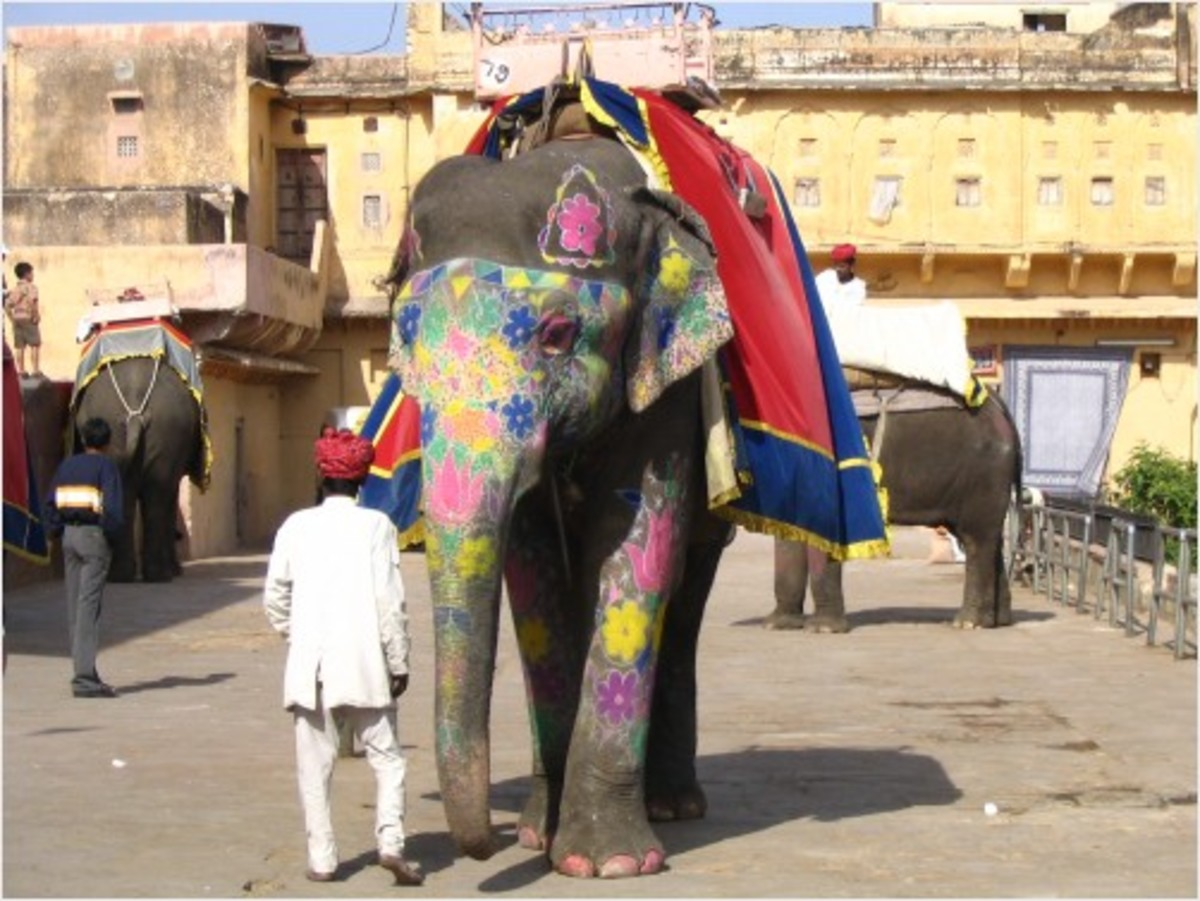 Decorated elephant in Rajastahn, India
