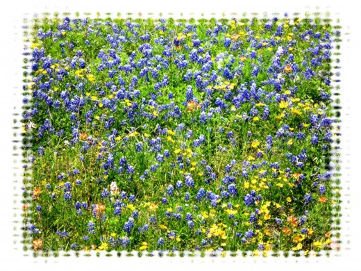 Field of blooming wildflowers