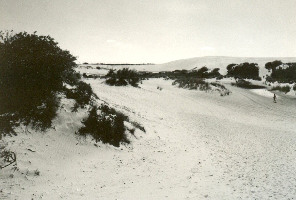 The Sahara-like dunes at Jockey's Ridge State Park