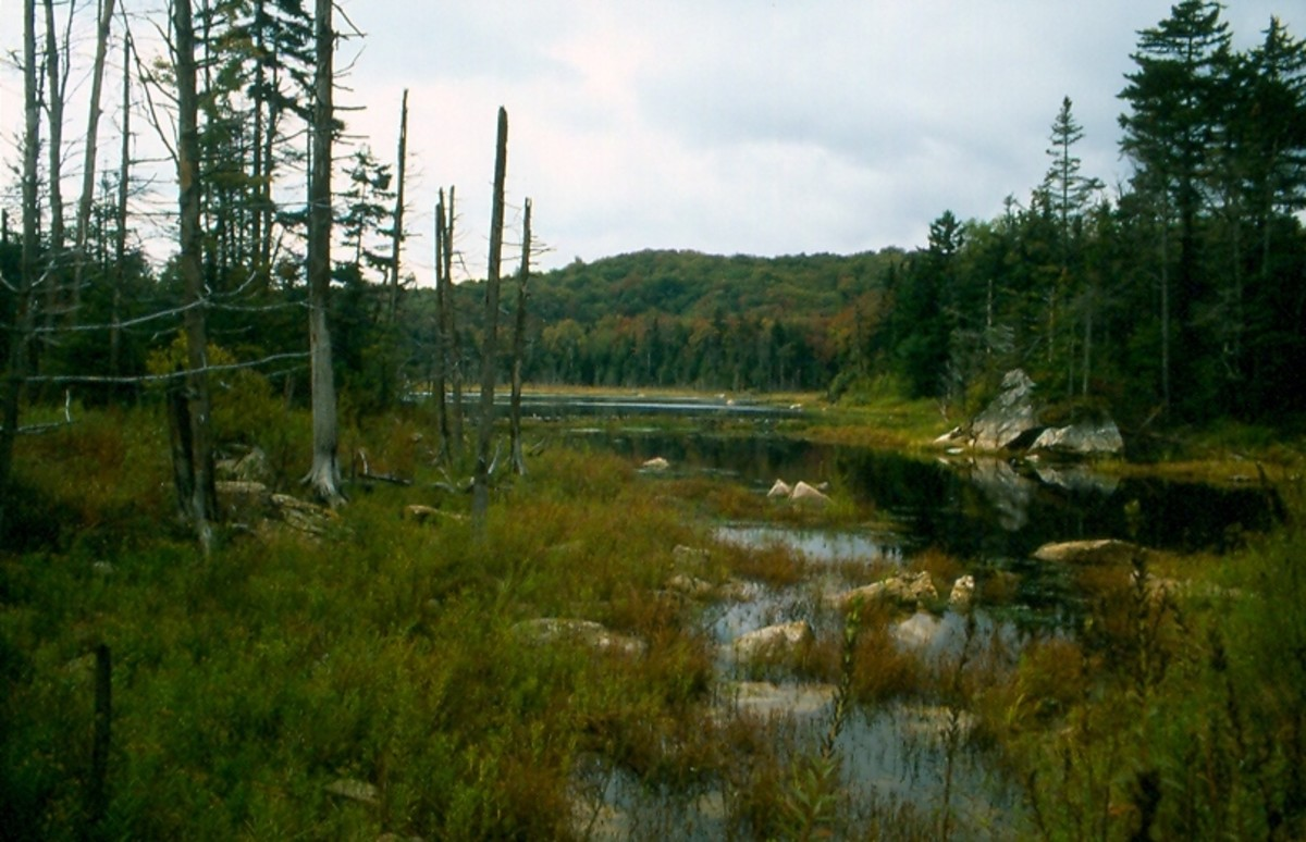 Beaver Pond, Searsburg, Vermont. Green Mountain National Forest.