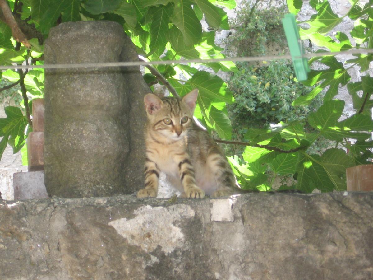 The Pretty Kitten!