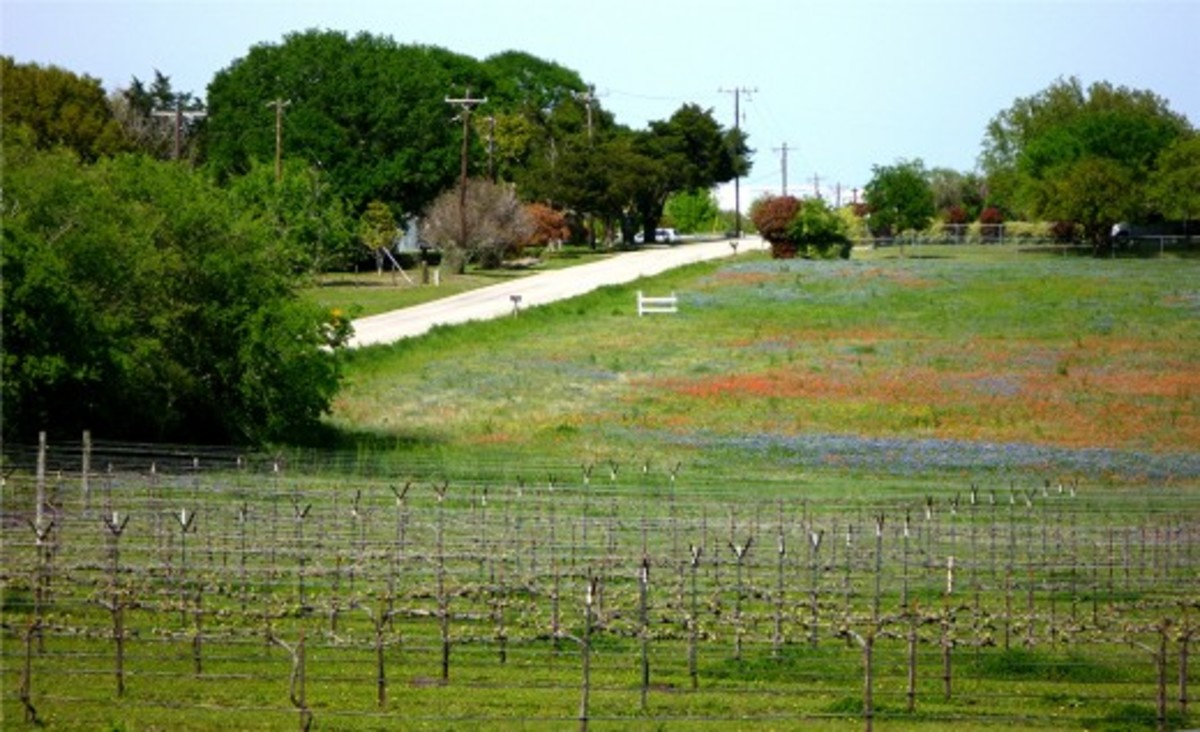 Looking back at Salem Road from Pleasant Hill Winery with wildflowers in bloom.