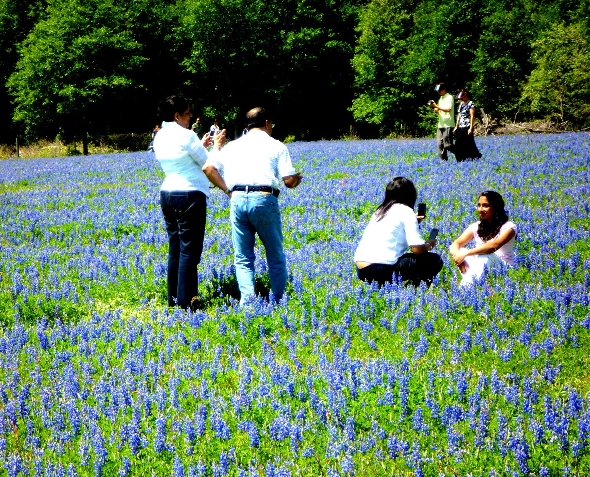 People enjoying the bluebonnets