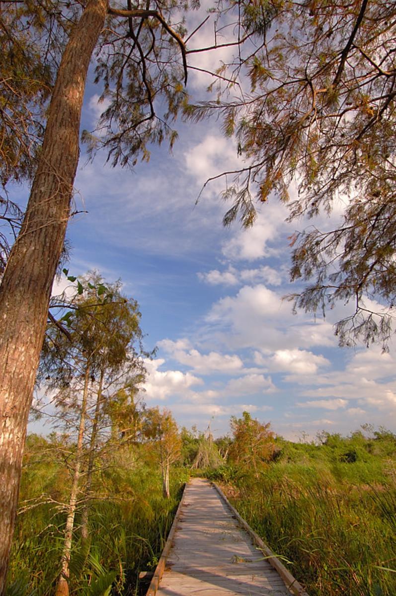 Loxahatchee National Wildlife Refuge
