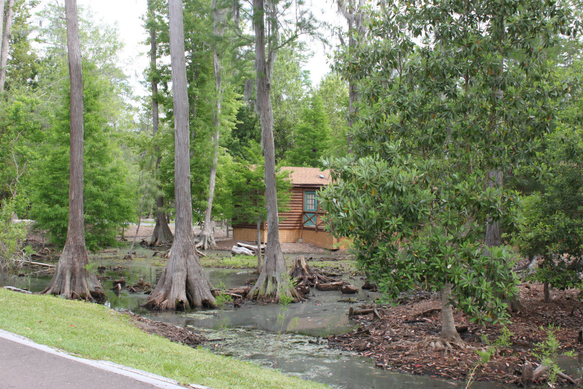 Fort Wilderness's awesome expanse of canals, cypress & pines