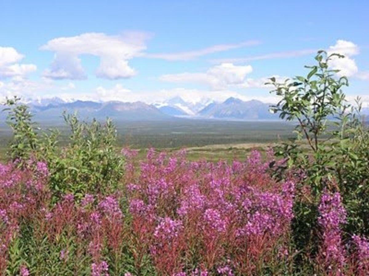 road-trip-to-alaska-on-the-alaska-highway