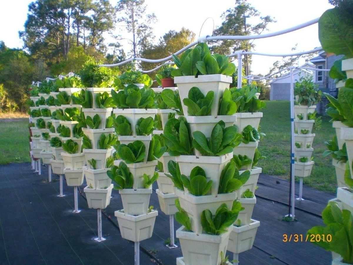 visit-kevin-newells-hydroponic-organic-vegetable-farm