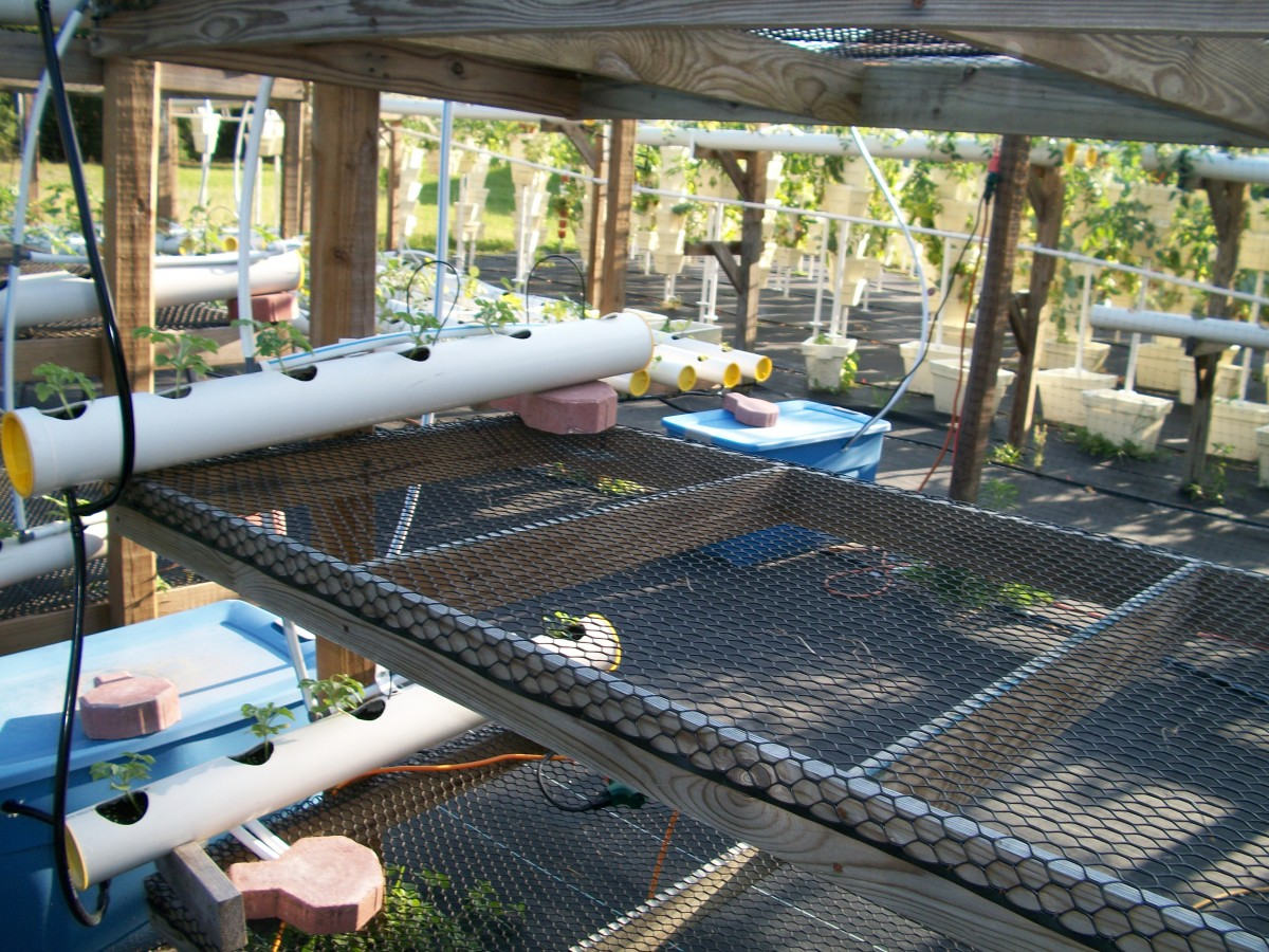 Another of Kevin's bright ideas -- bunk beds to grow melons. The seedlings are set in their pipe grower, and now all they need is heat.