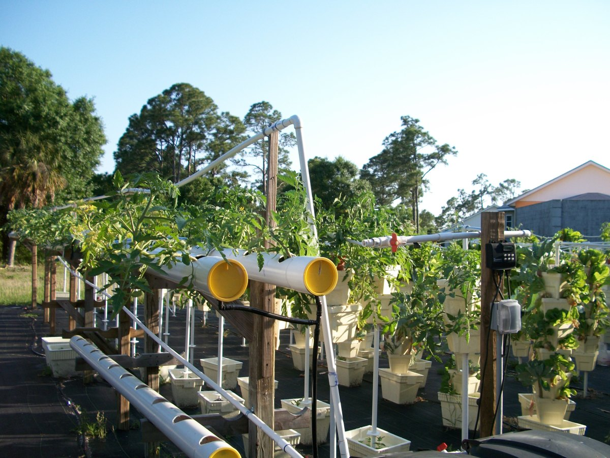 This is one of Kevin's own designs using PVC piping and fixtures. The tomatoes grow hanging down to either side of the pipe.