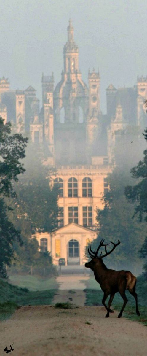 10 Most Beautiful Castles in France - Chateau de Chambord at dawn