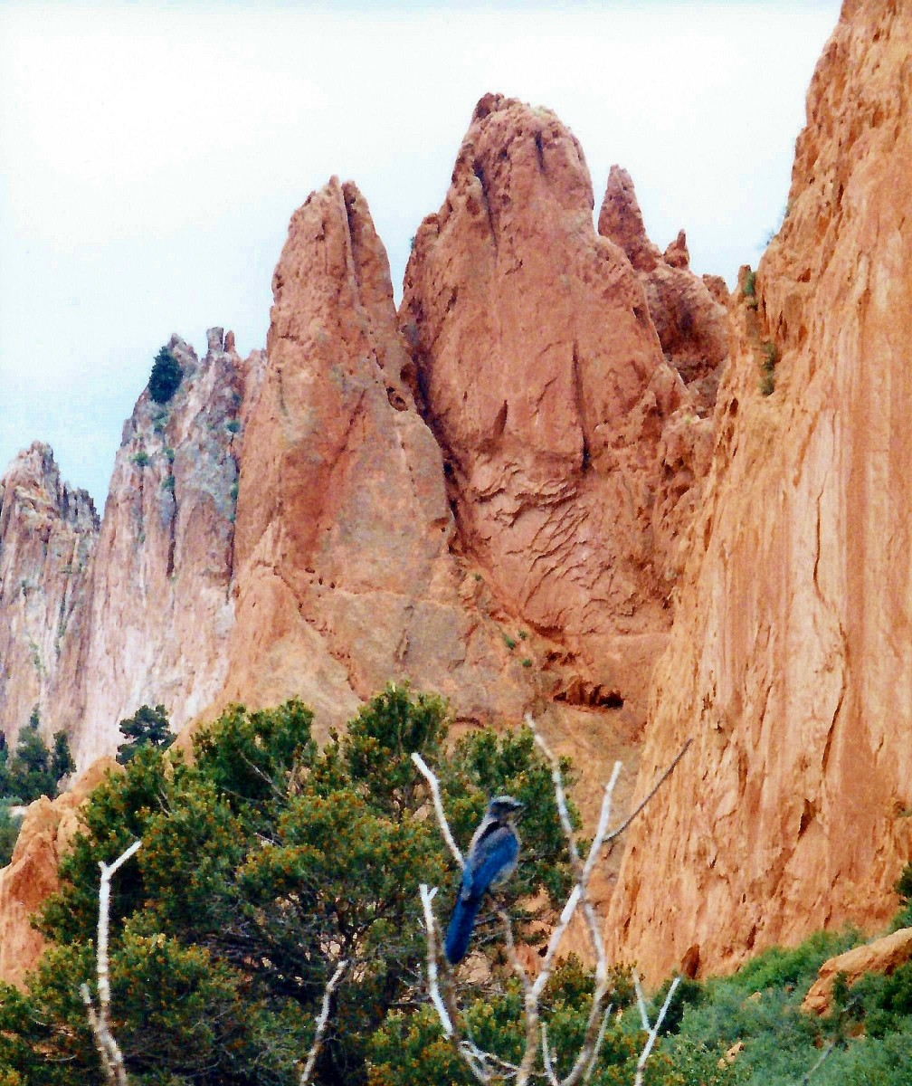 Note the bird in the Garden of the Gods city park in Colorado Springs.