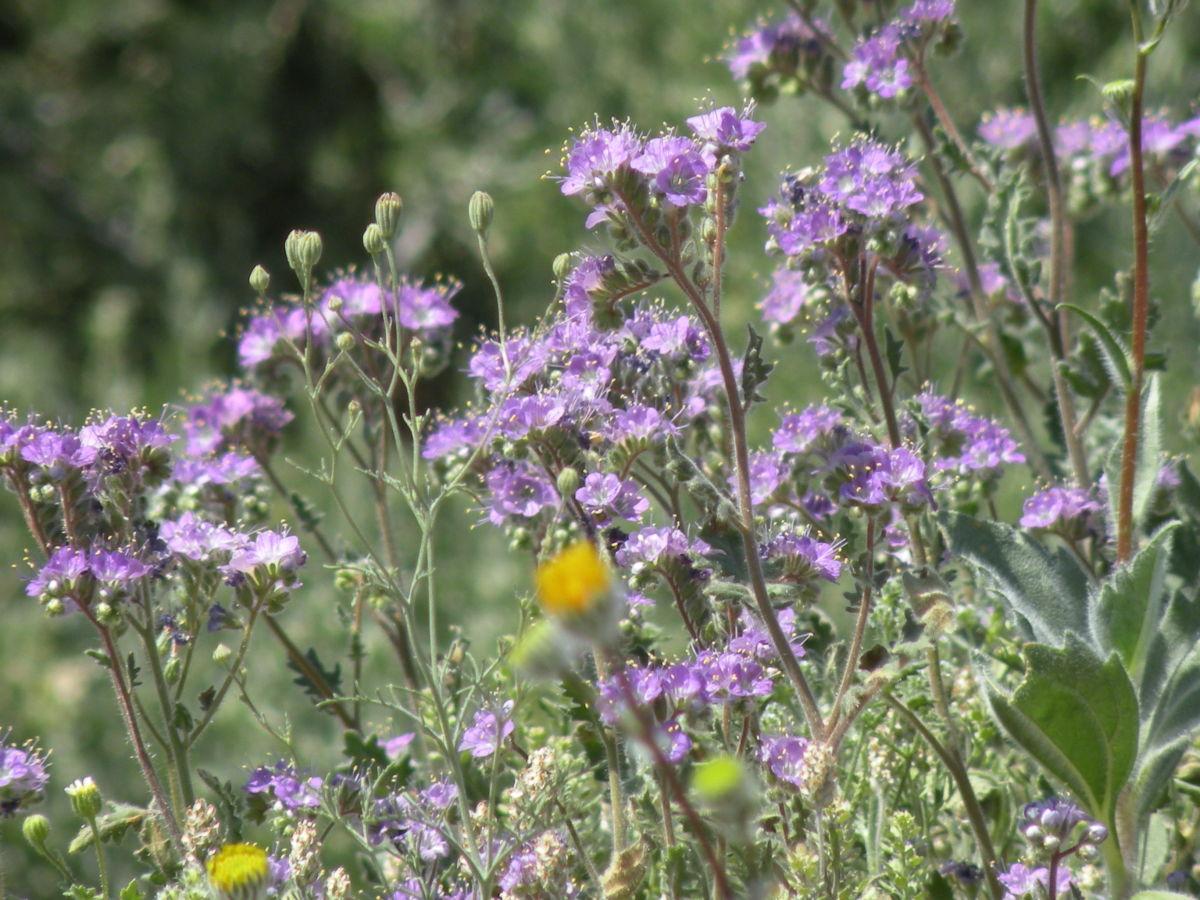 Purple wildflowers bloom on a bank alongside a rugged dirt road.