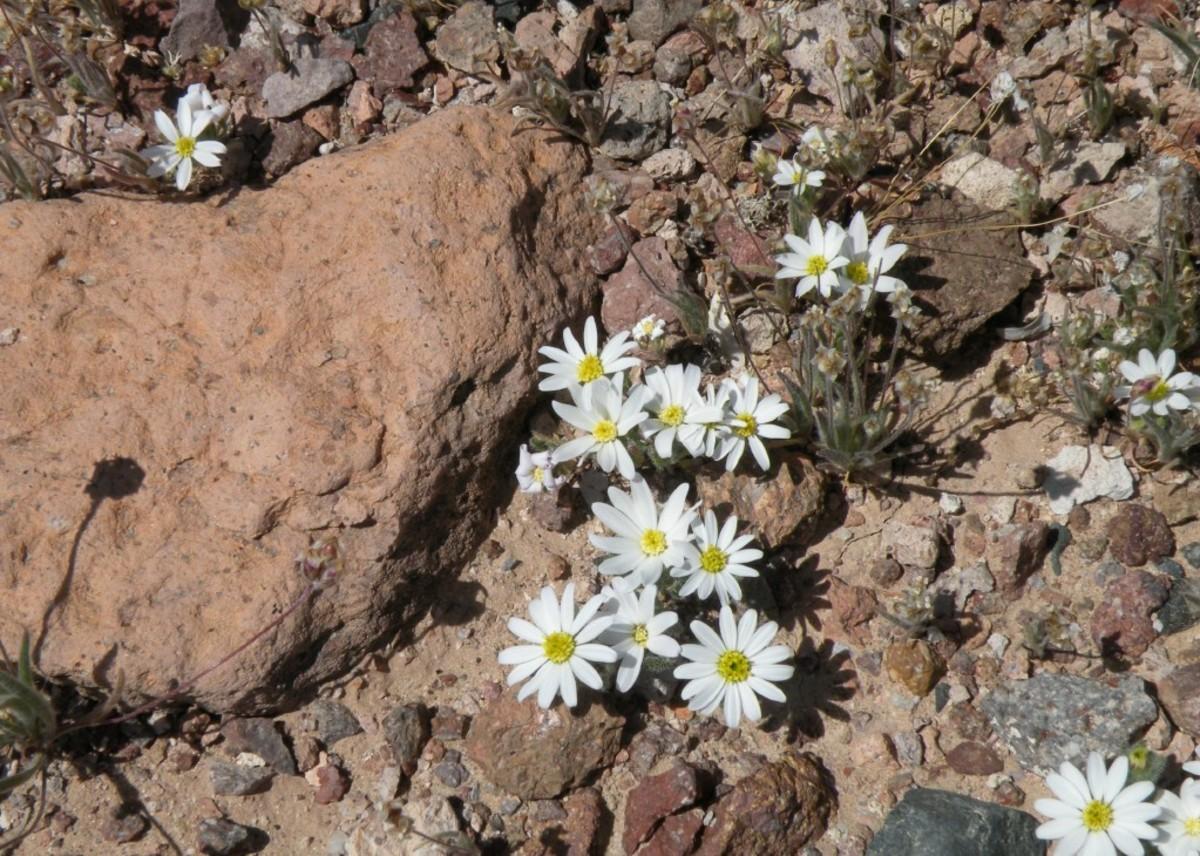 Tiny daisies pop up between the stones.