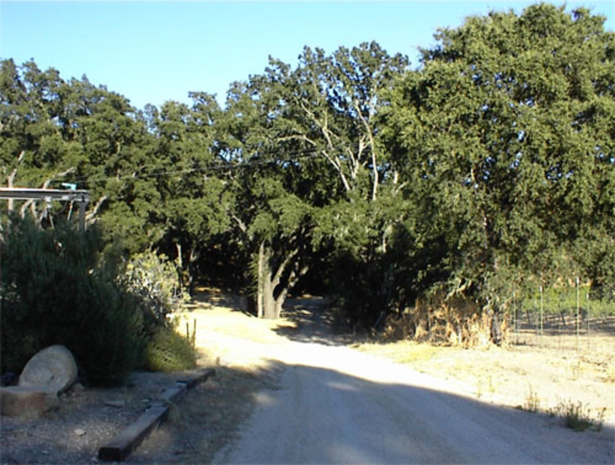 This is the beginning of Oak View Lane, which begins behind the Donati Family Winery