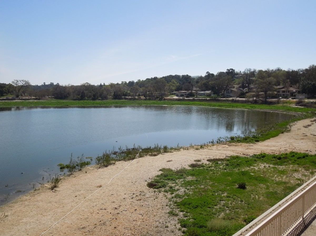 This photo was taken on March 8, 2015 after some water has returned to the lake. All the grassy areas used to be underwater, so you can see the lake is still suffering, but at least birds are returning.