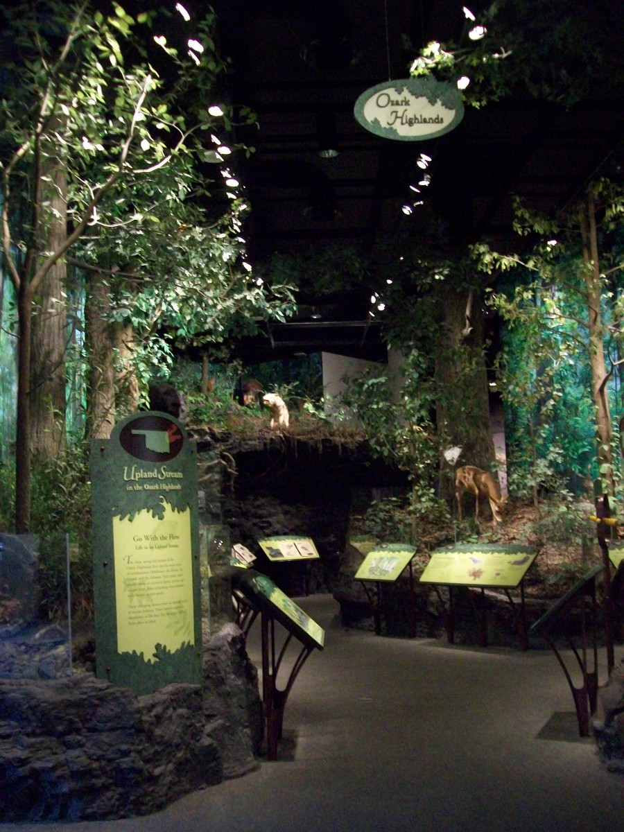 The Hall of Natural Wonders Exhibit, featured in this picture is the Ozark Highlands.