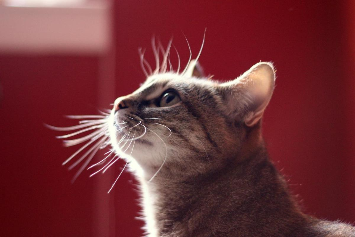 Check out those whiskers!