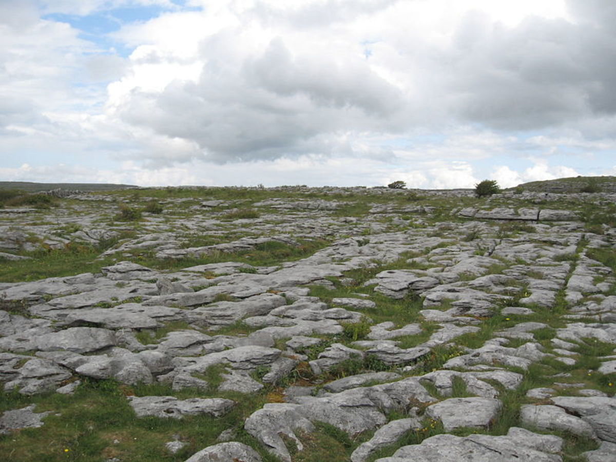 The karst meadow of The Burren, Ireland