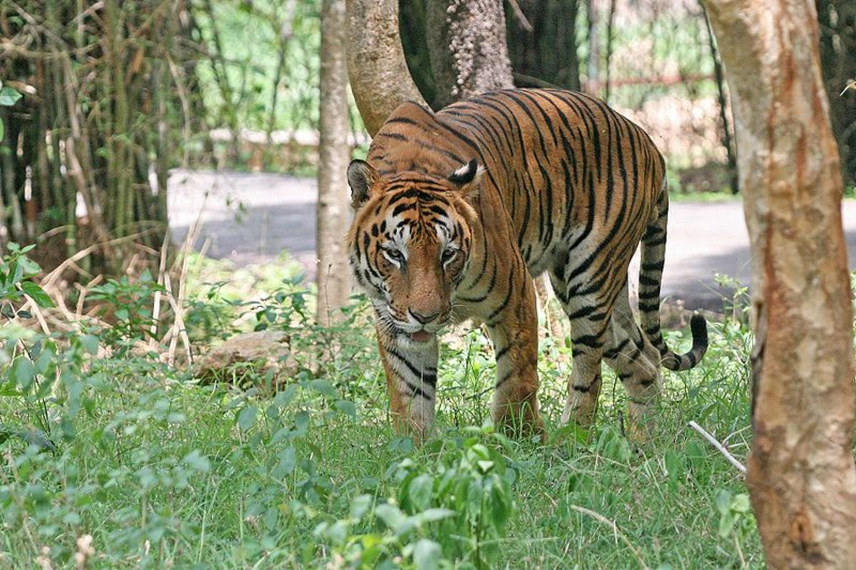Hopefully you don't come across a tiger when looking for the perfect place to picnic at SGNP.