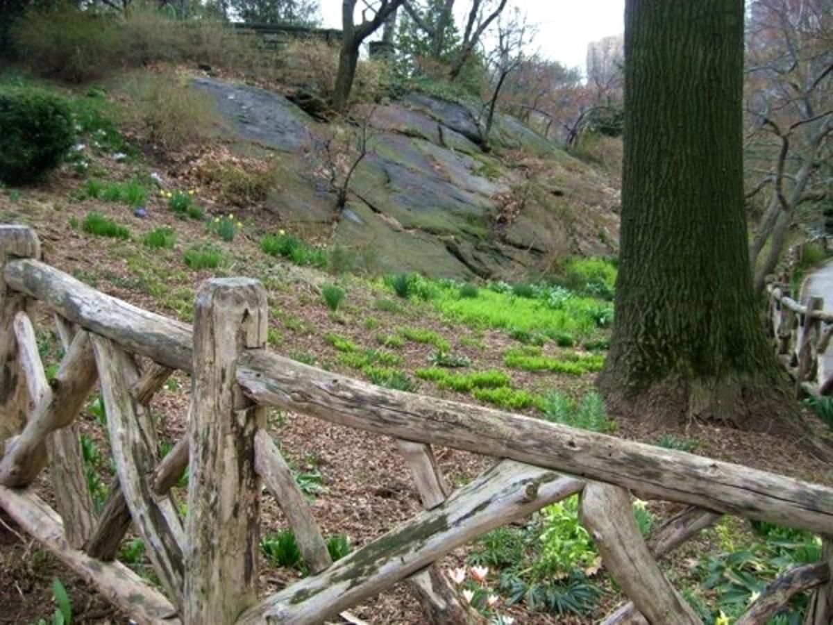 The Shakespeare Garden in Central Park.