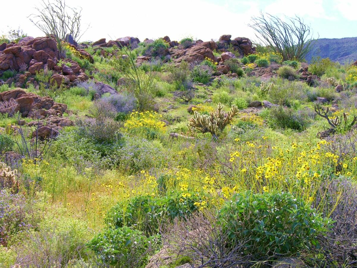 Spring in the Anza-Borrego Desert State Park