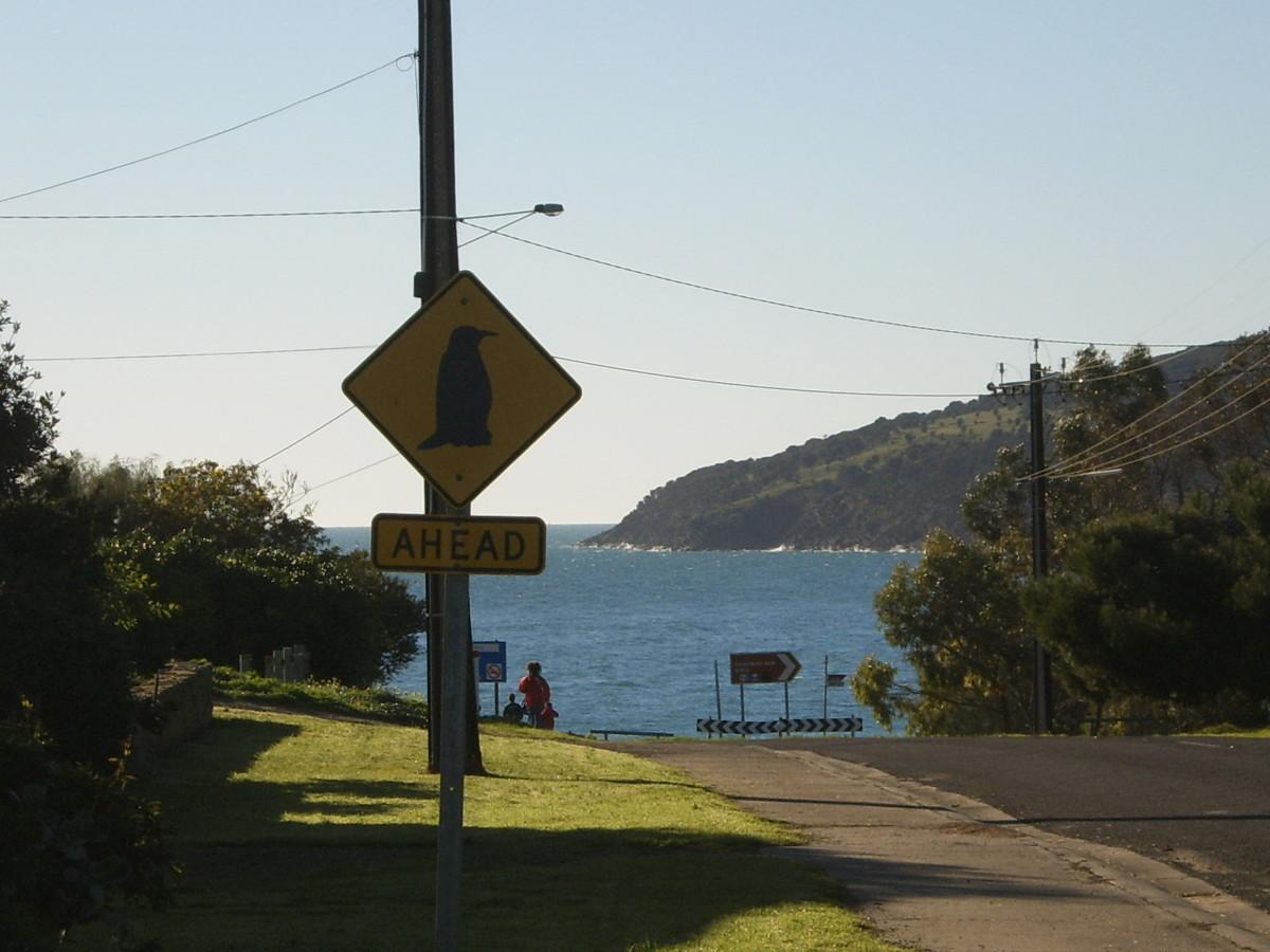 Penneshaw, Kangaroo Island - Home of the Little Blue Penguins