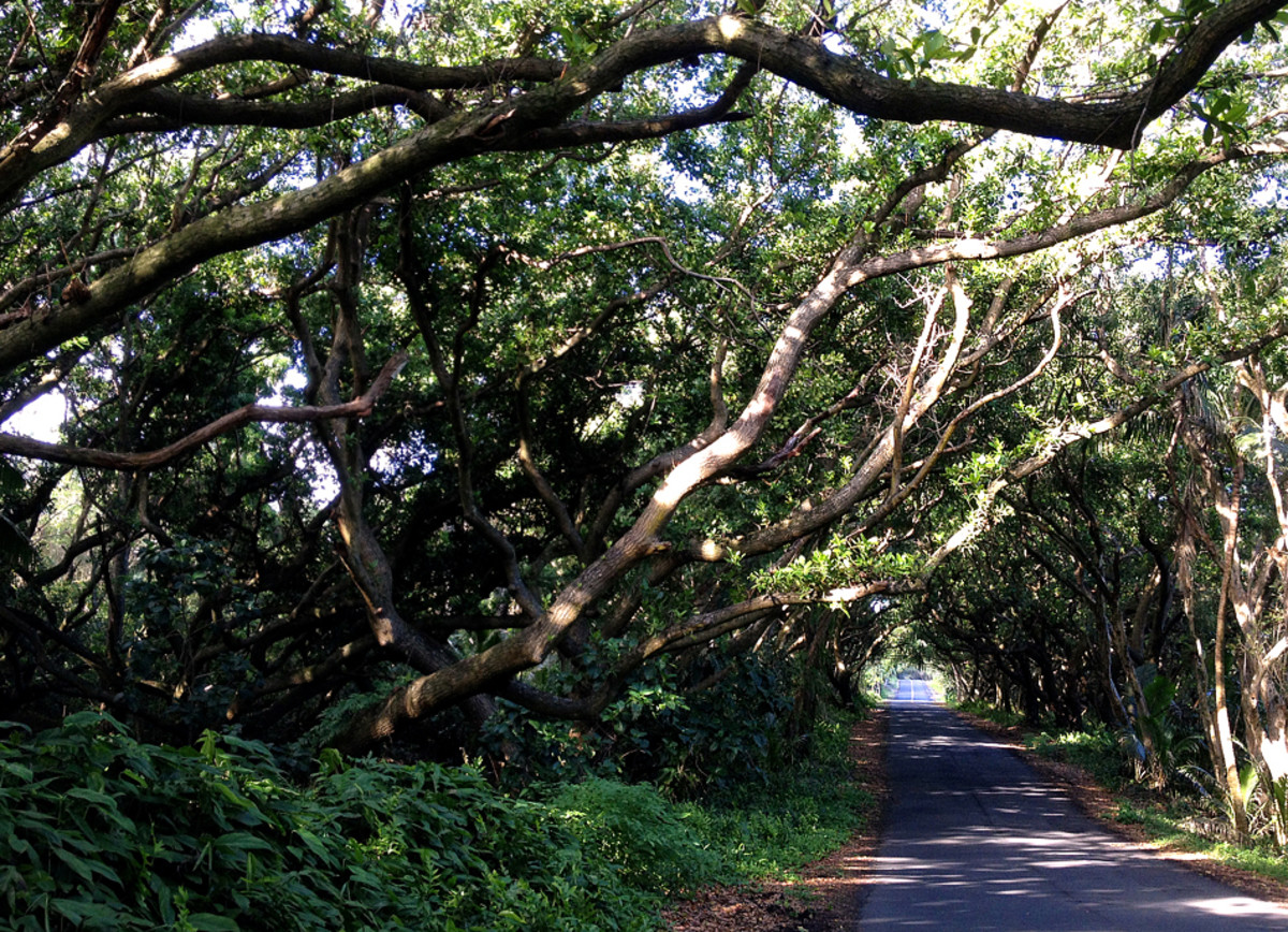 Many sections of the road are shaded by tree tunnels.
