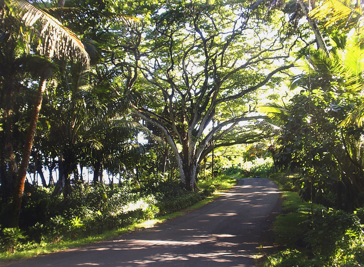 hidden-hawaii-wild-and-scenic-puna-coast-on-the-big-island