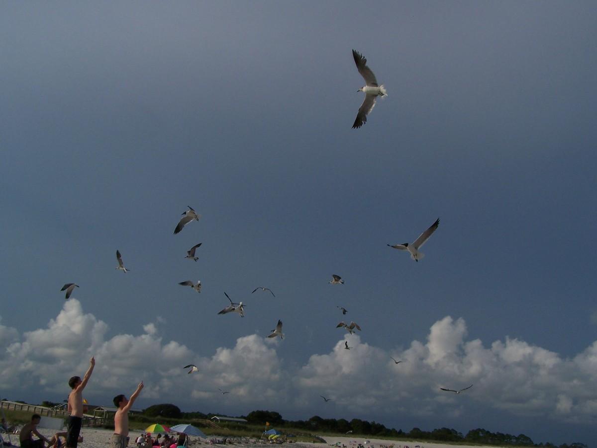 Seagulls at Jetty Beach