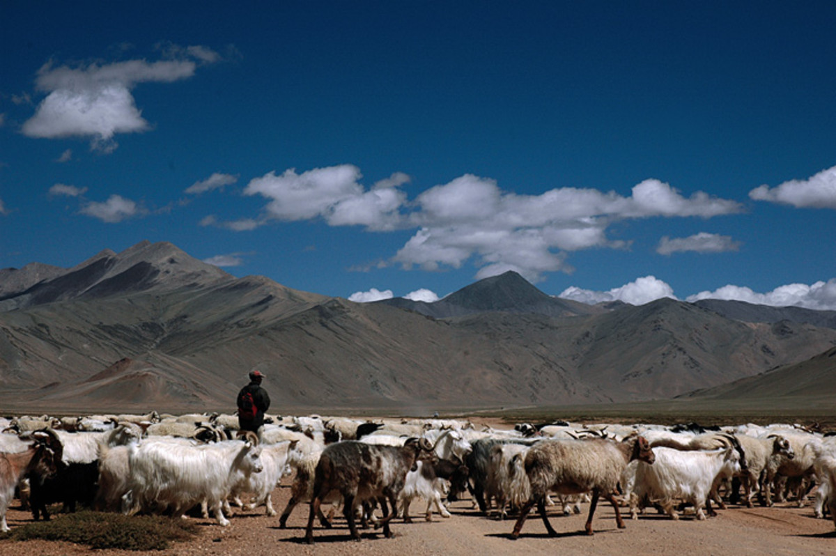Shepherds in Ladakh