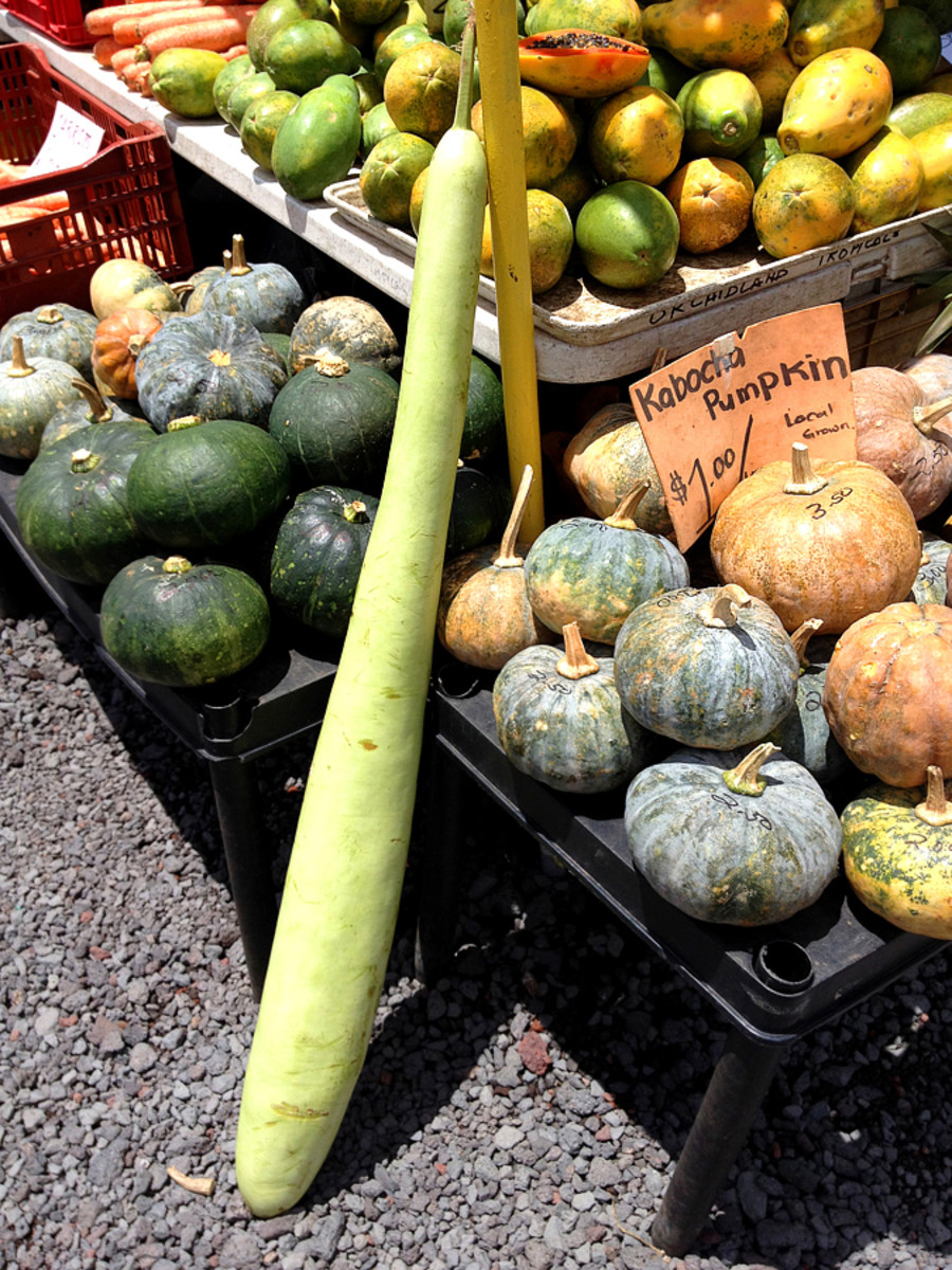 Perfect Pumpkins and What Appears to Be the Vegetable Equivalent of a Baseball Bat