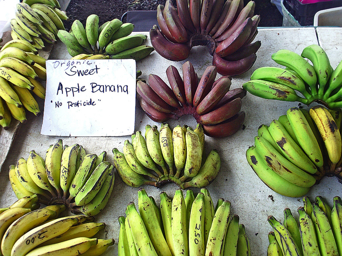 Beautiful Organic, Pesticide-Free Bananas