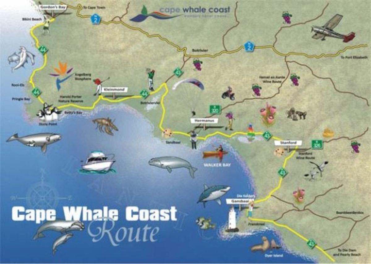 Cape Whale Coastal Road - A Route Map