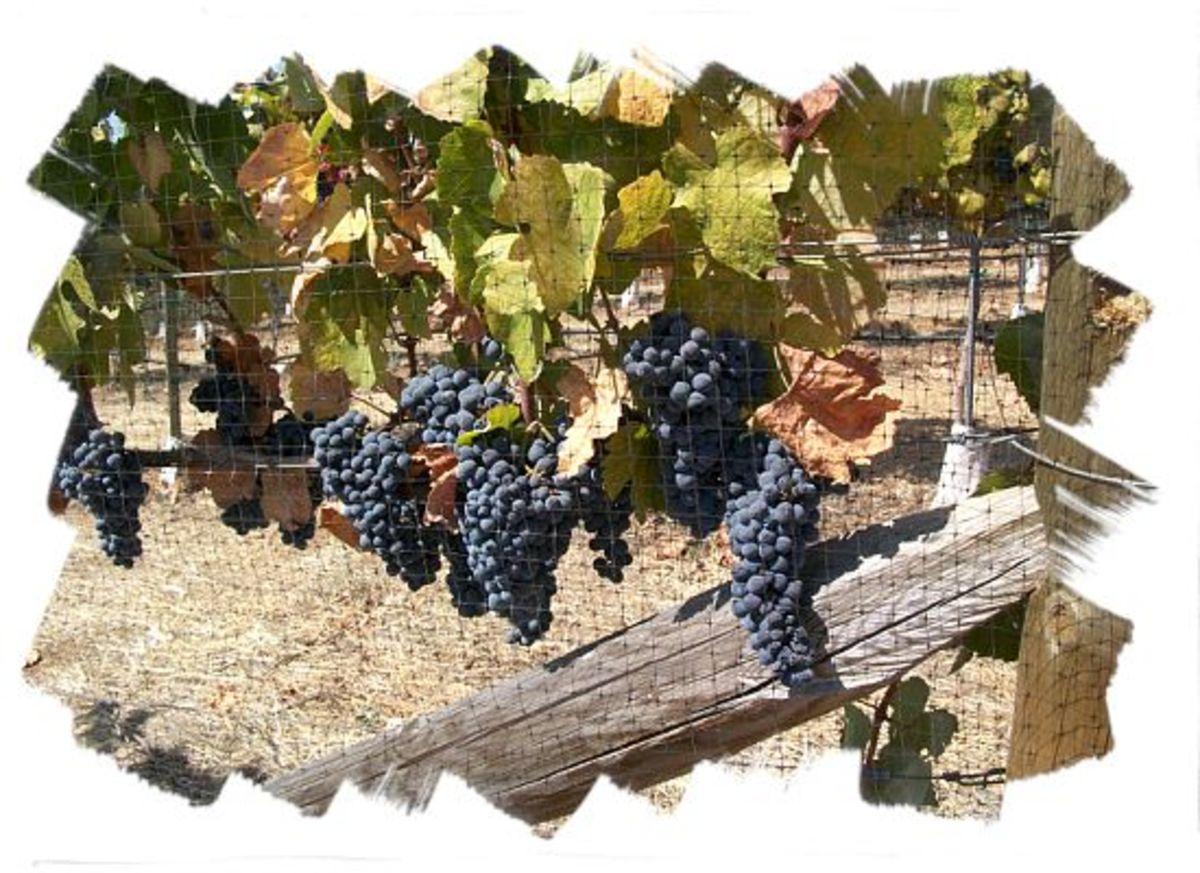 wise_villa_winery