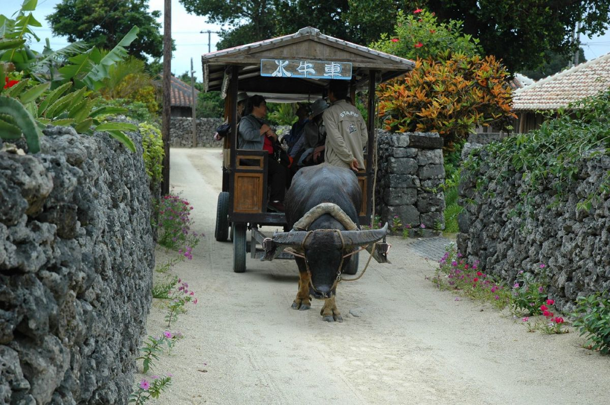Most roads on this tiny island are just sand, and bicycles, ox taxis and walking are the only ways of getting around.