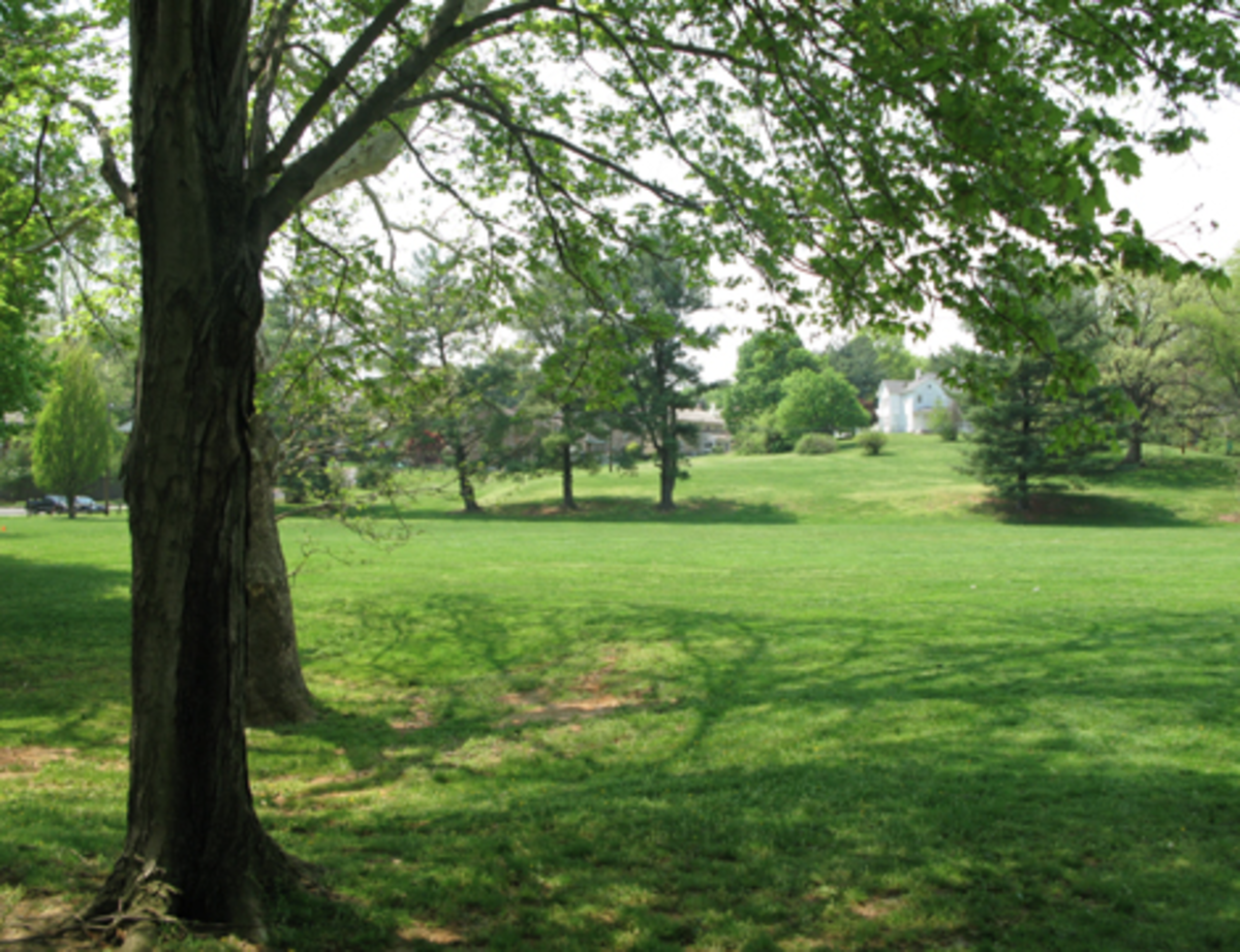 Enjoy open green areas in Arlington!