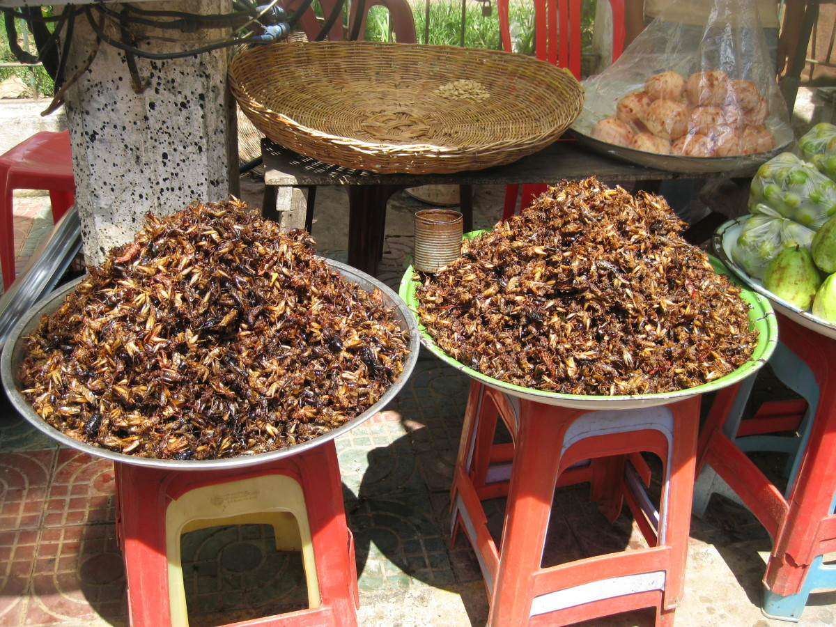In the mood for a snack? How about some fried crickets?! They can be found just at about any market in Southeast Asia