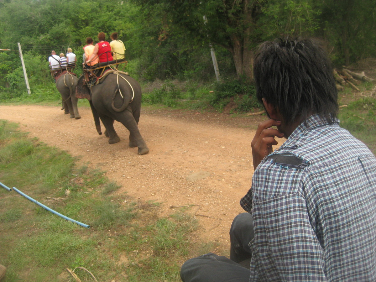 Elephant trekking in Vietnam