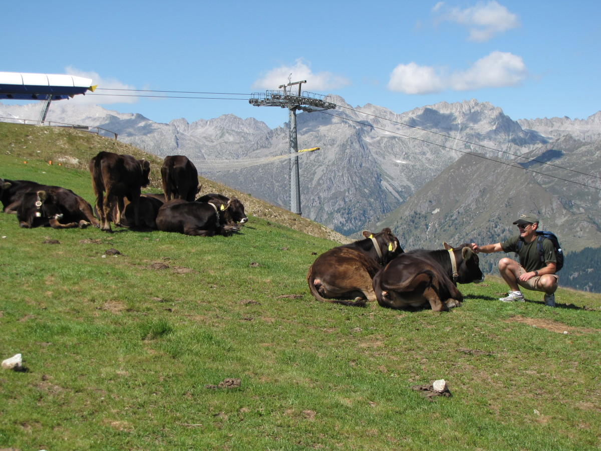 Head to the Dolomites where the cows may outnumber the tourists