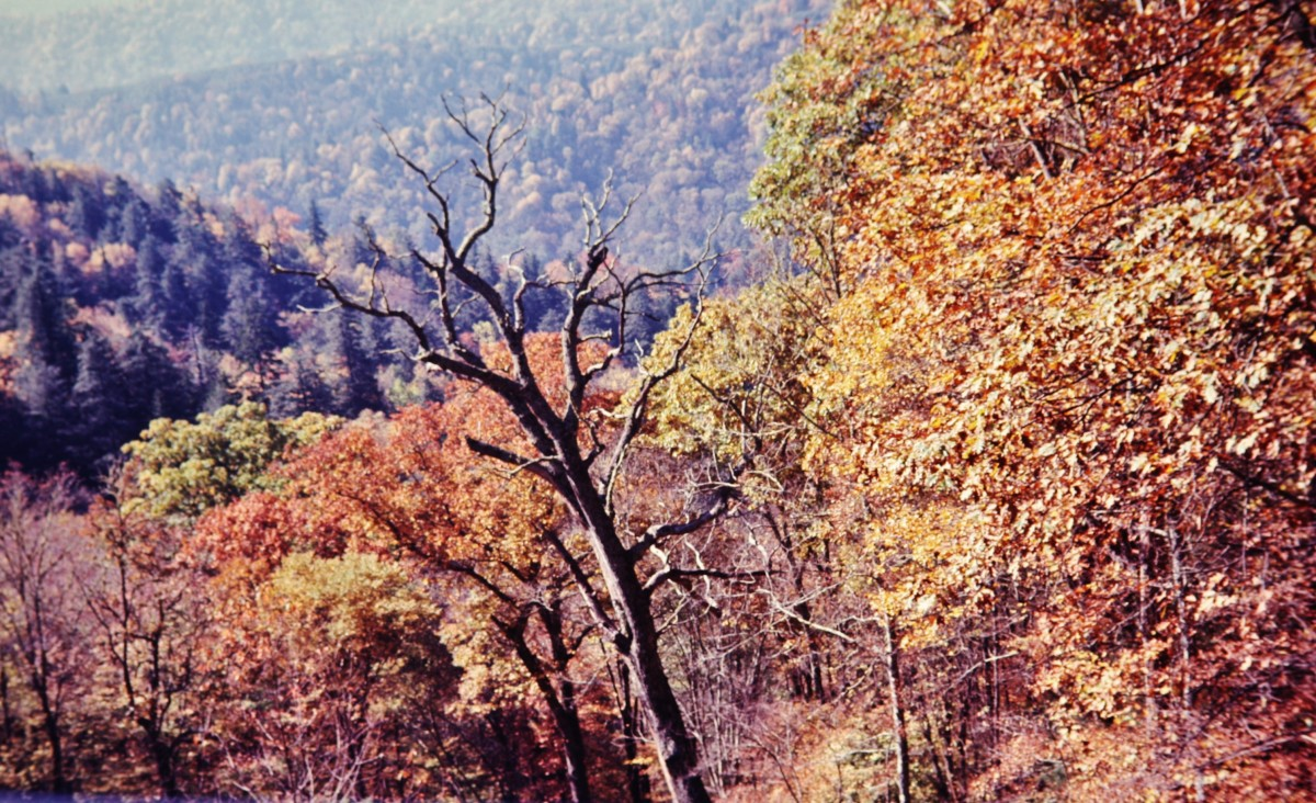 Autumn leaves in the Great Smoky Mountain National Park