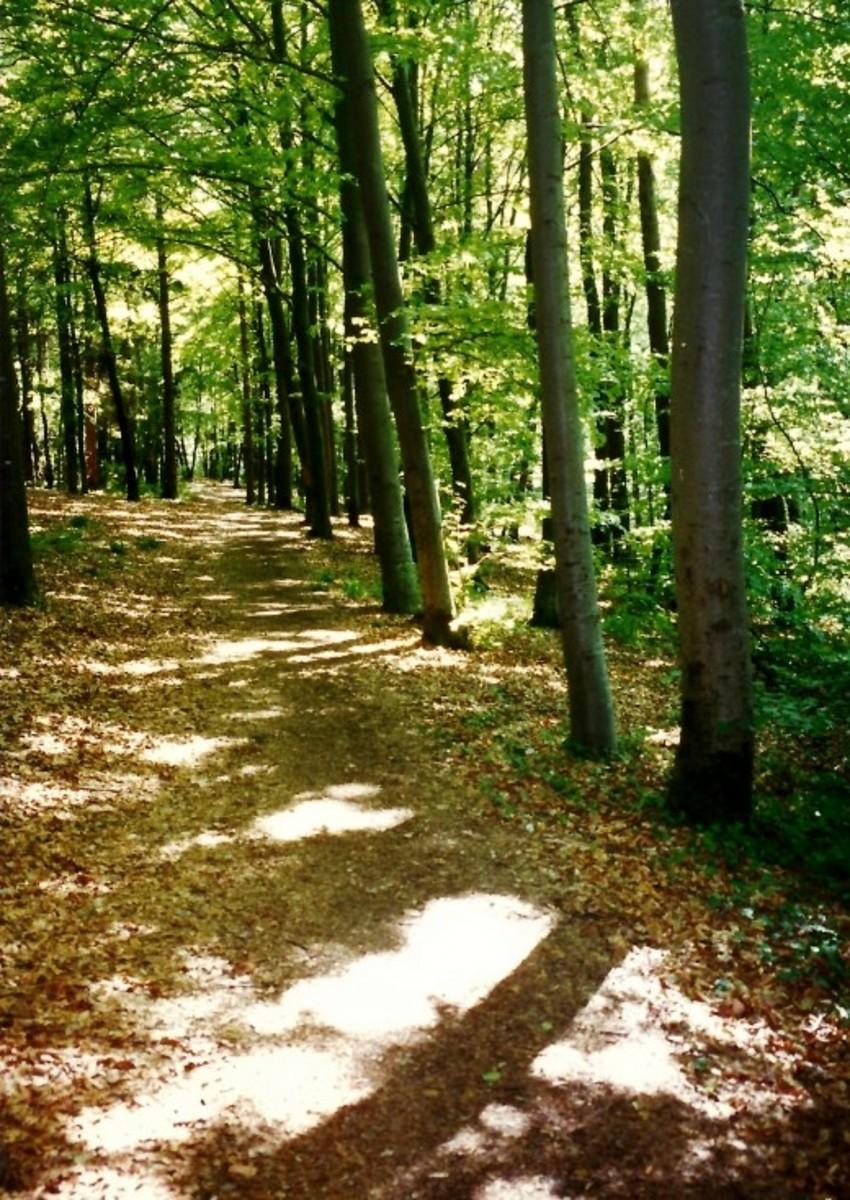 Forest path (the Alten Rain) above Herrenberg