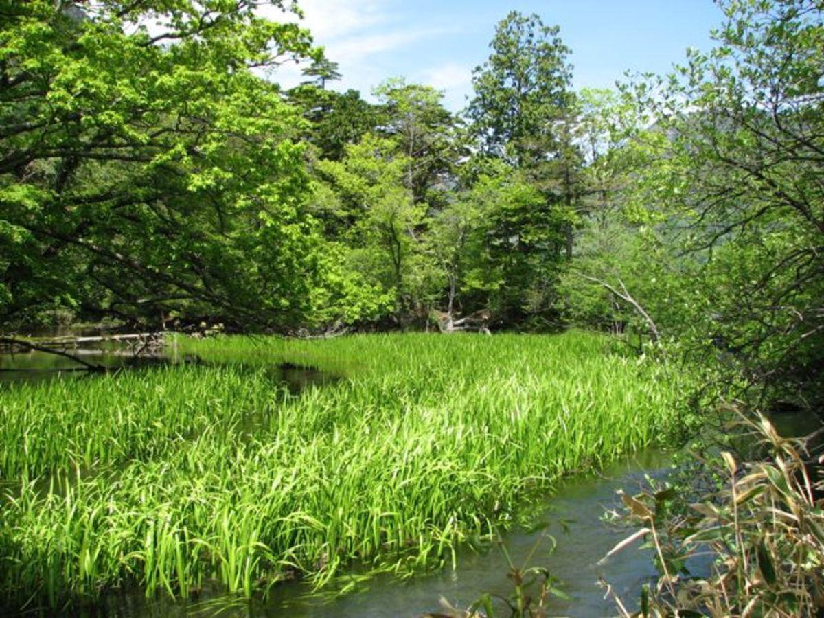 The edge of Yunoko lake as it empties into Yu falls.
