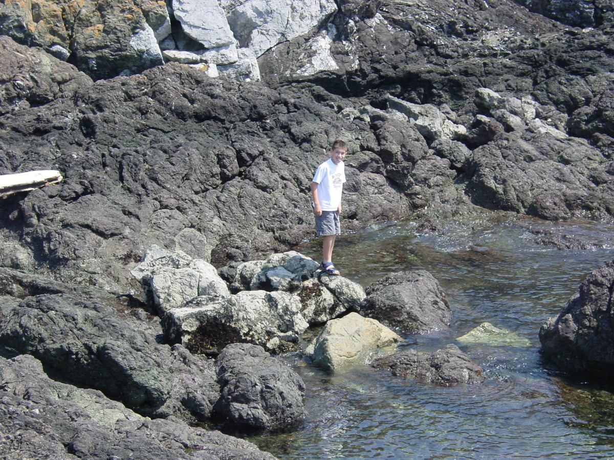 Check out the tide pools