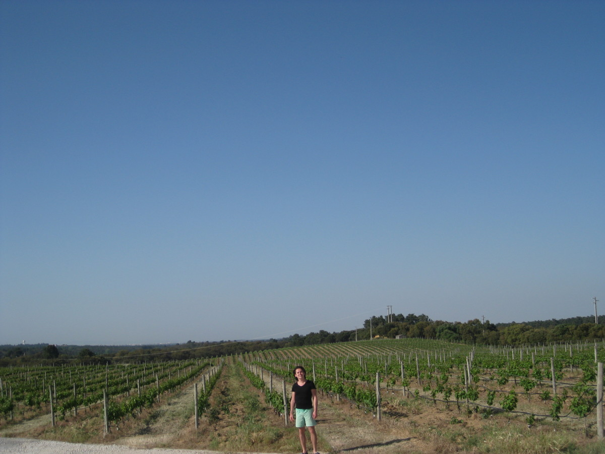 A vineyard in Setubal