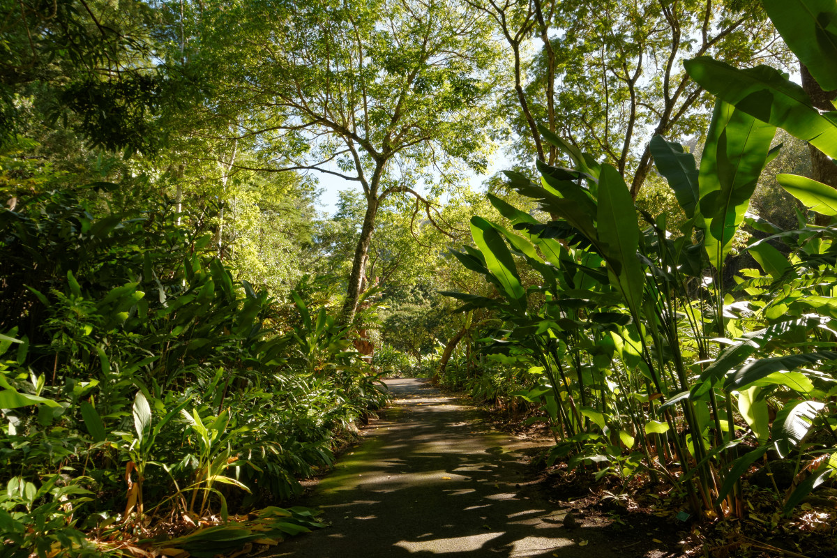 Path through Waimea Valley